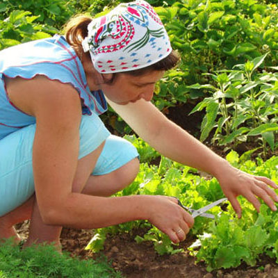 Gardening Pain-free